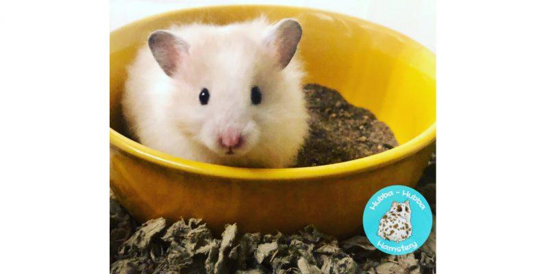 Hamster02