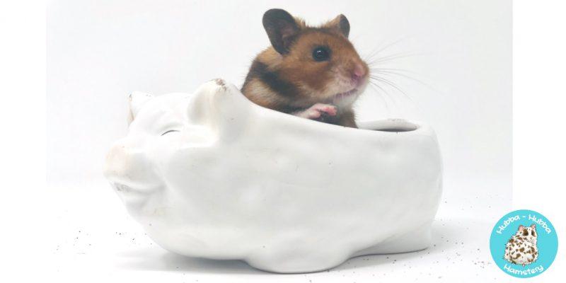 Hamster32