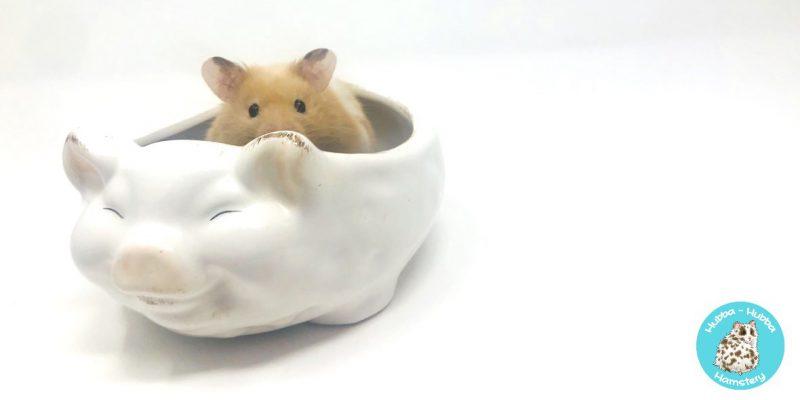 Hamster39