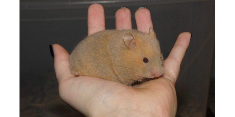 Hamster40
